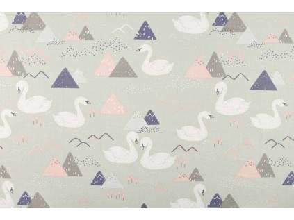 labutě šedá