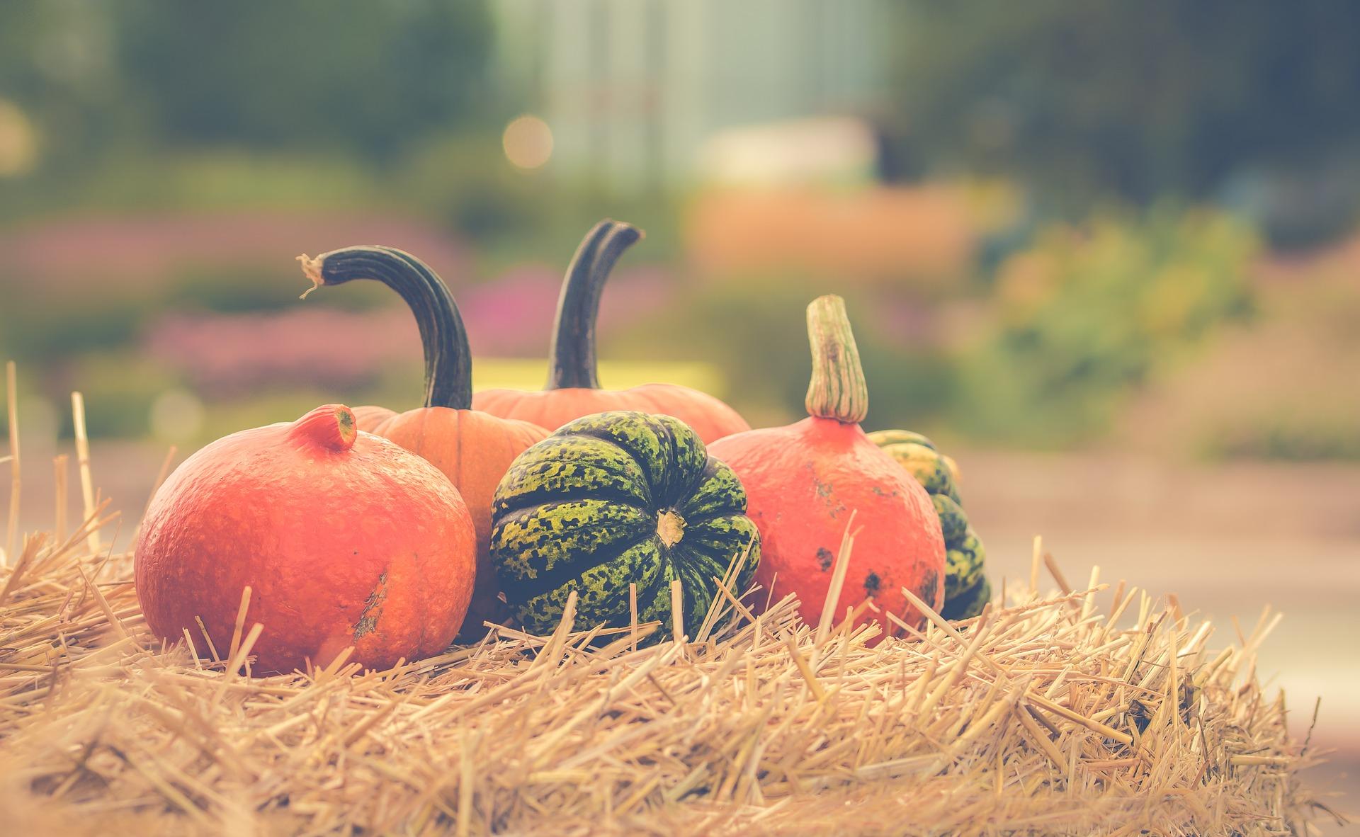 04_pumpkin-2989569_1920