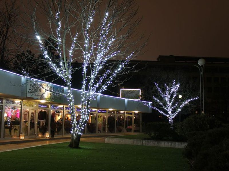 Aké žiarovky použiť na vianočné osvetlenie listnatého stromu