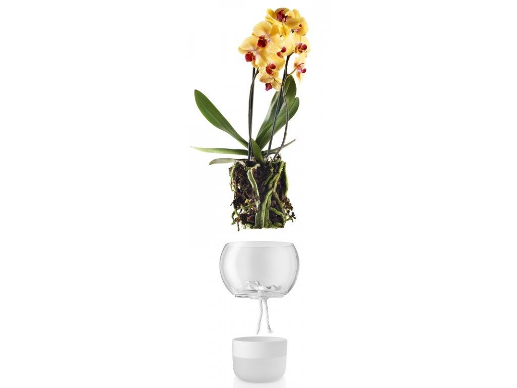 14961 samozavlazovaci skleneny kvetinac na orchidej prumer 15cm eva solo