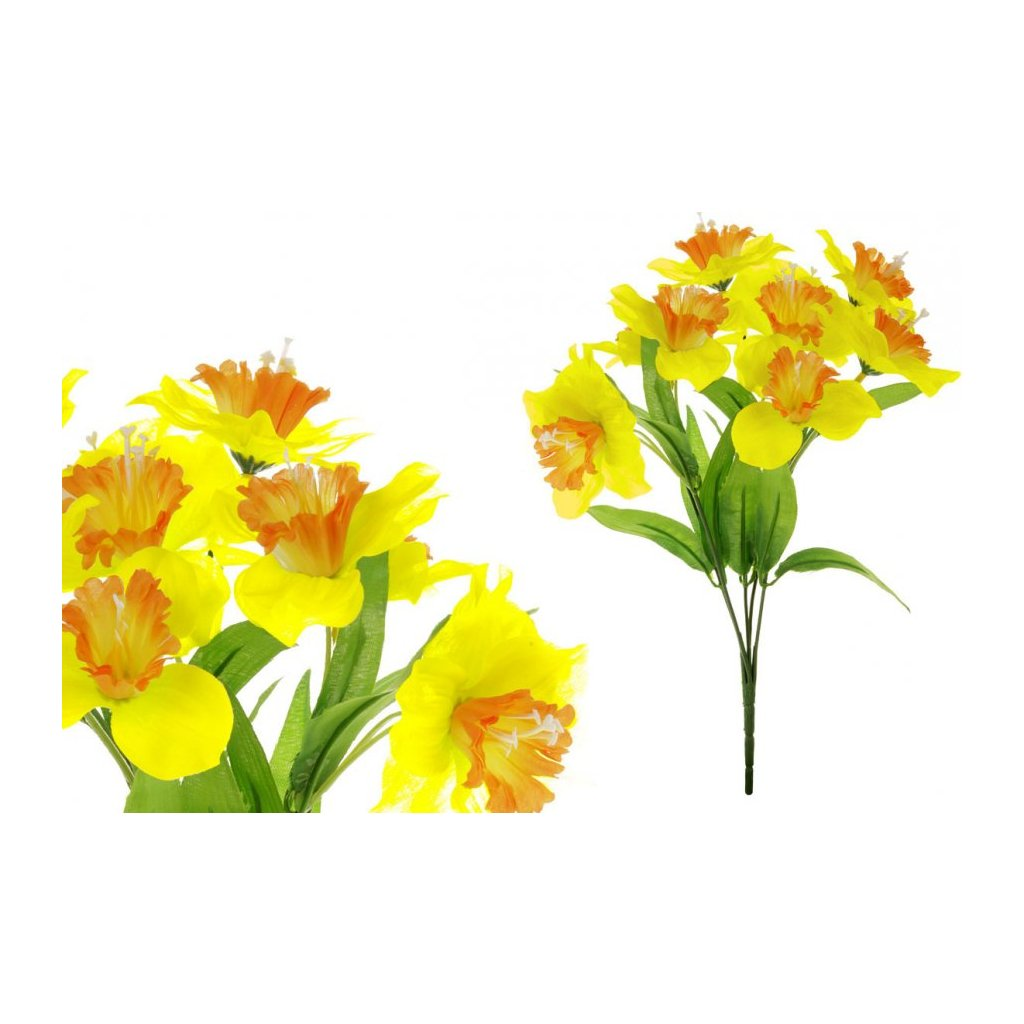 Narcis barva žluto oranžová