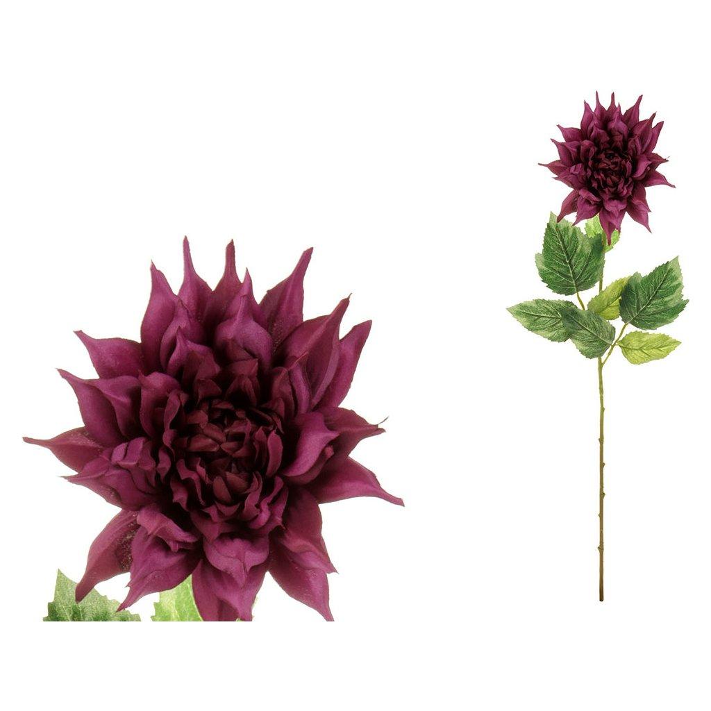 Jiřina, barva tm.fialová.
