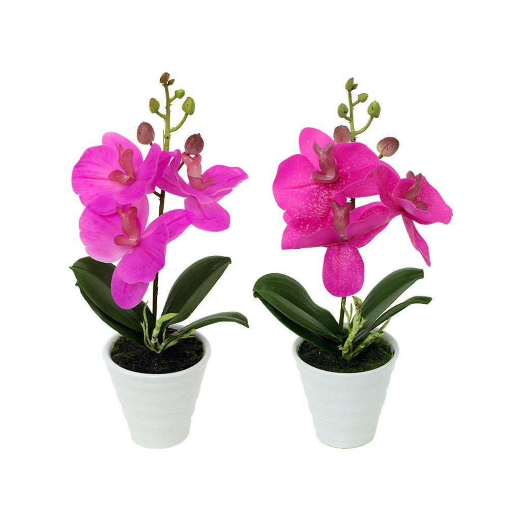 Orchidea v keramickém květináči cena za 1 ks