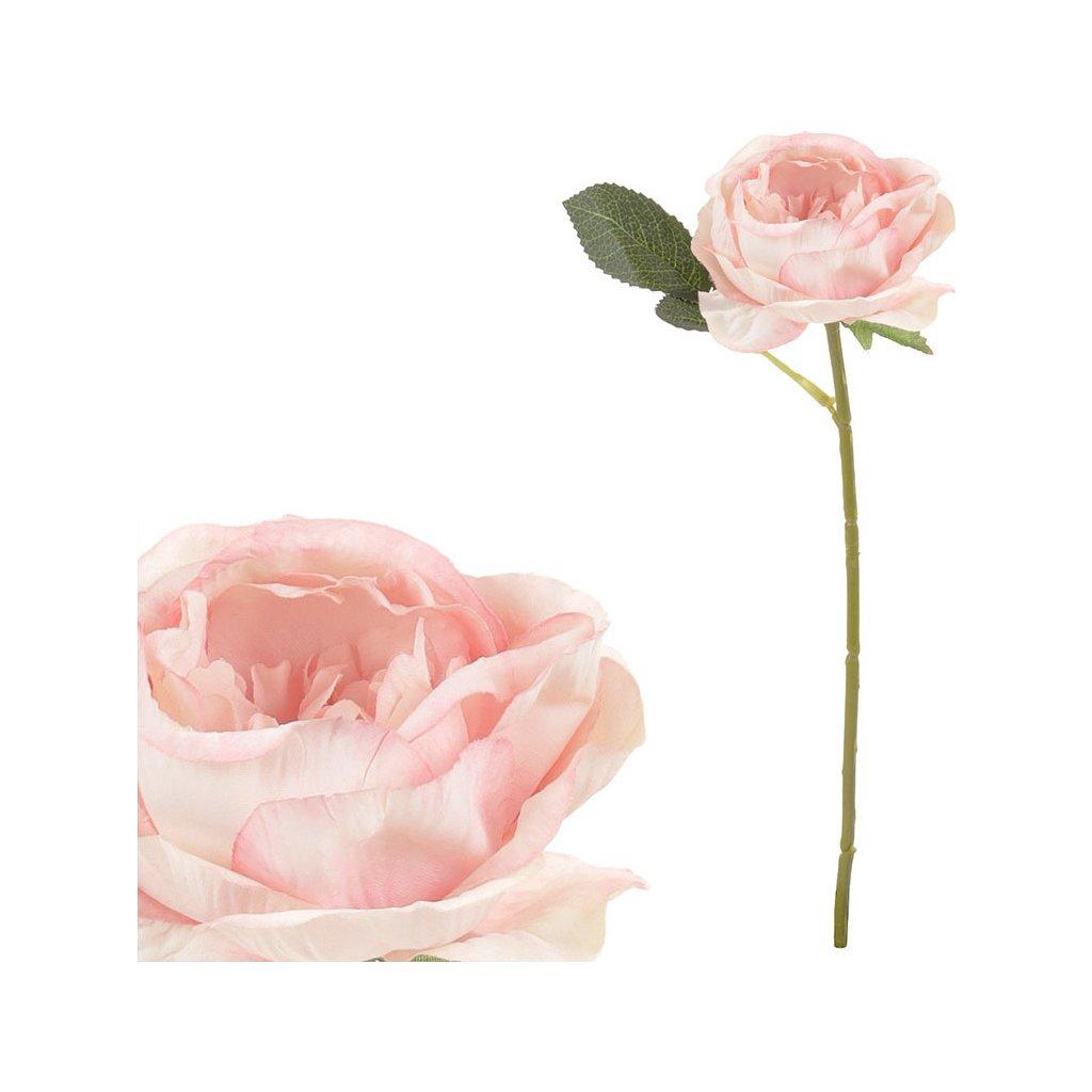 Růže barva růžová