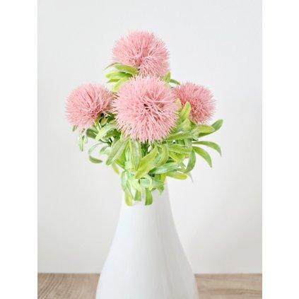 Bodlák puget barva růžová
