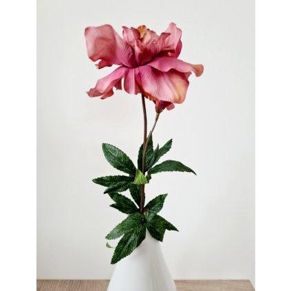 Čemeřice, barva odstíny staro-růžové.
