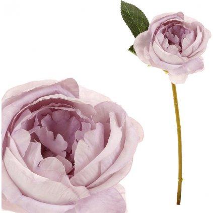 Růže barva světle fialová
