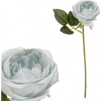 Růže barva modro šedá