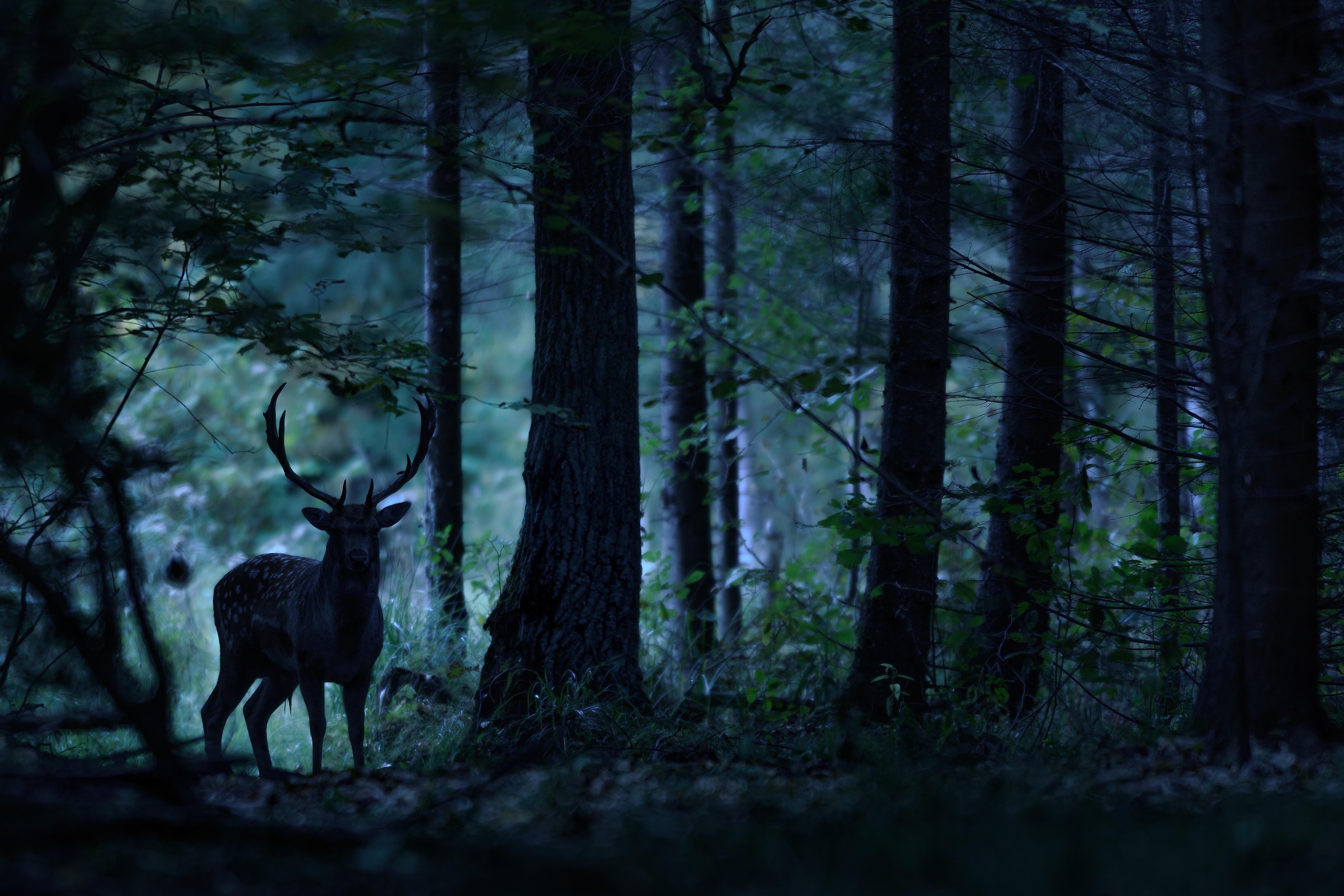 Noční les s termovizí a clonou