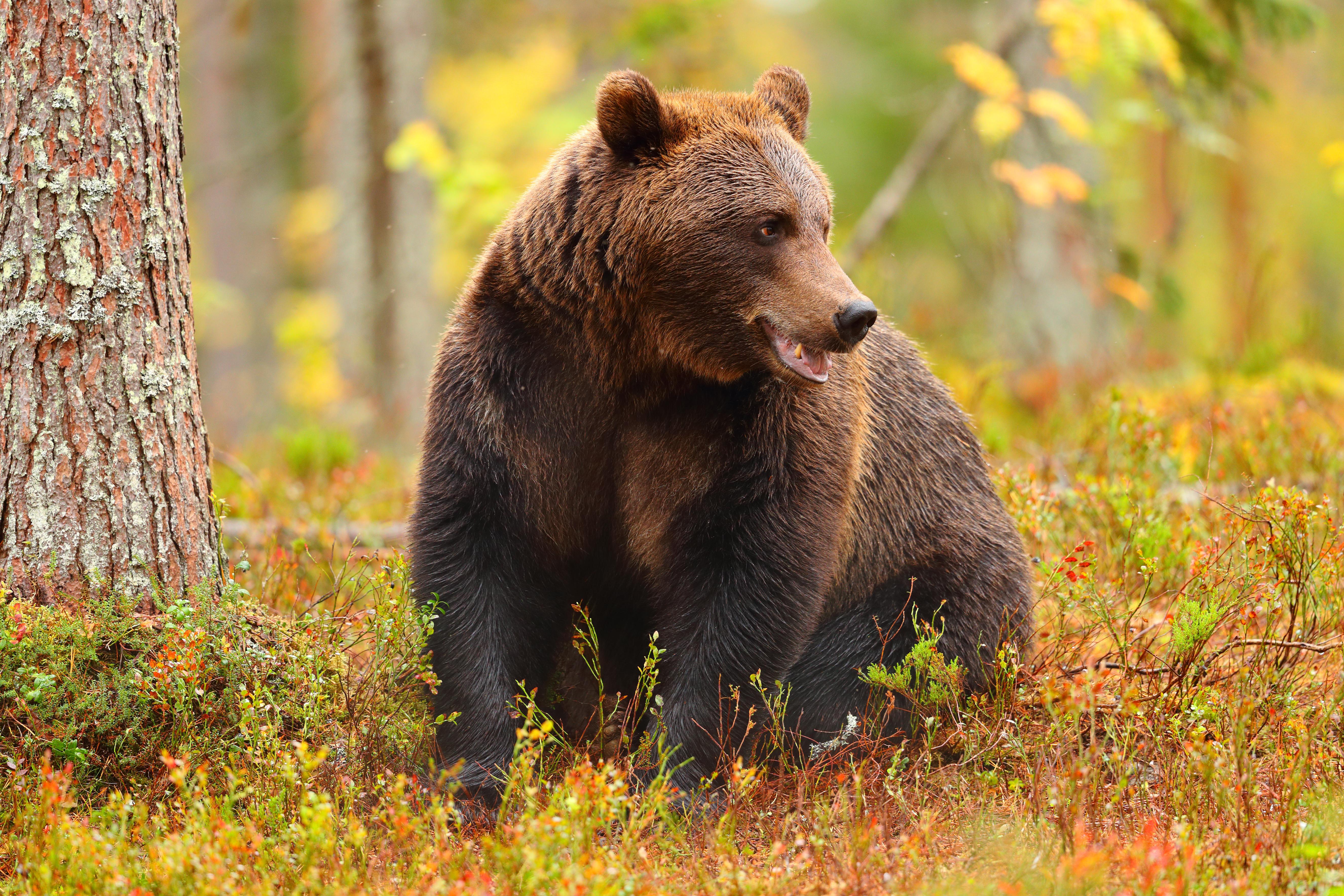 Co dělat při setkání s medvědem