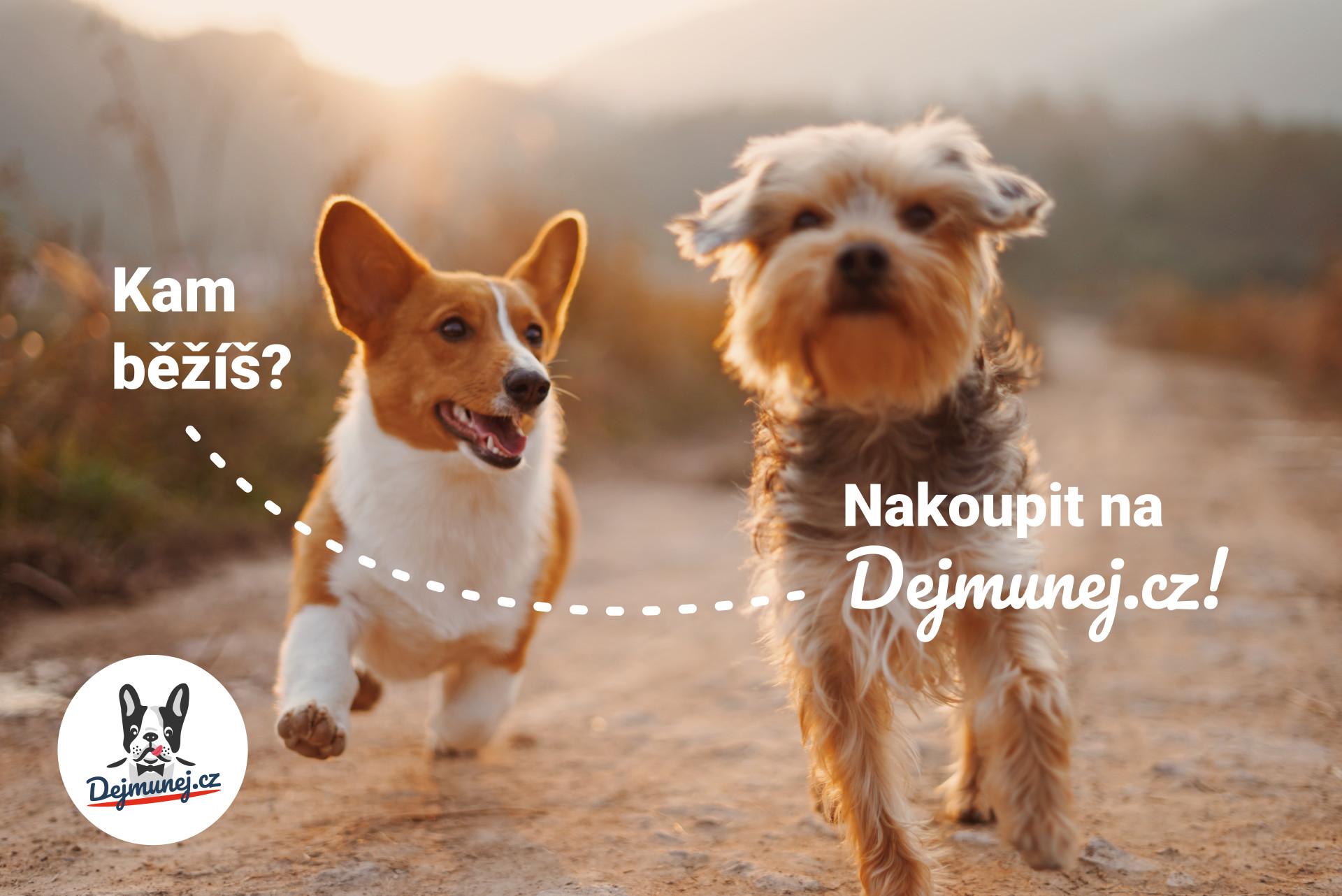 Dejmunej.cz je nový e-shop pro psy. Čím si vás i vaše mazlíčky získá?
