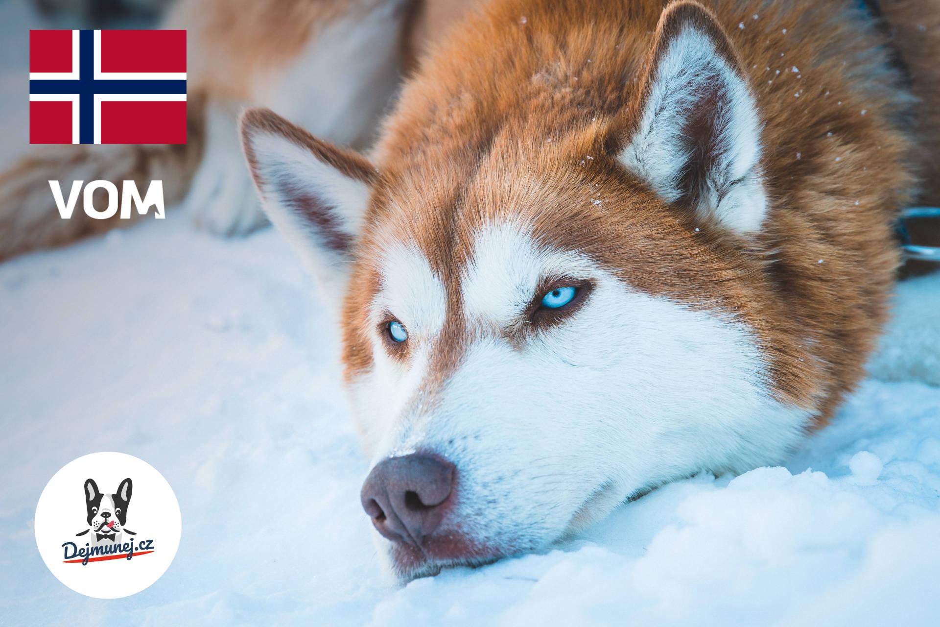 Odteď u nás koupíte i značku krmiva pro vítěze nejtěžšího psího závodu na světě