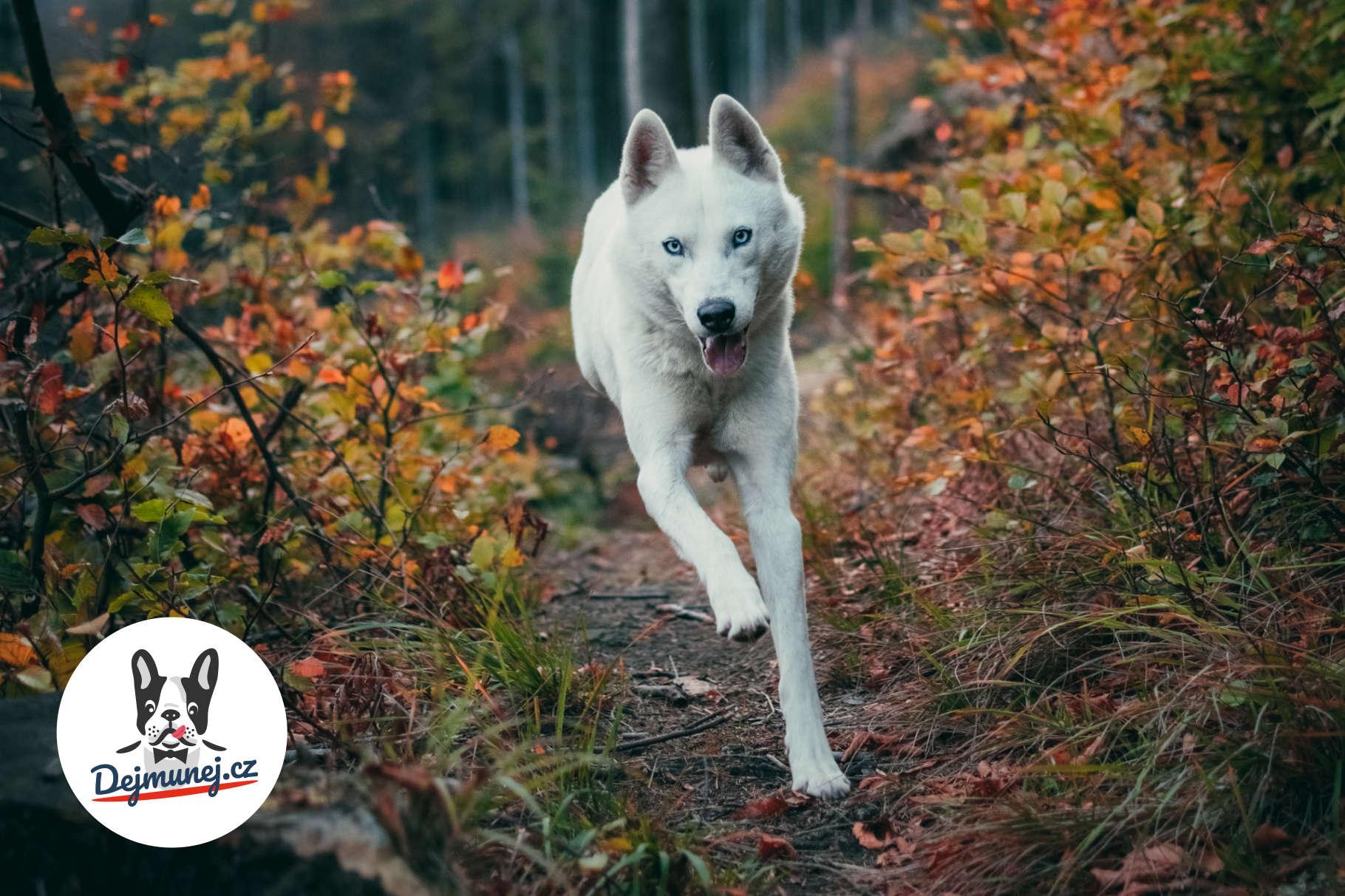 barf-jidelnicek-doplnky-stravy-psi