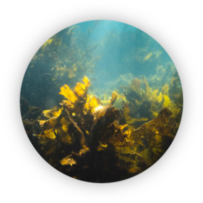 morske-rasy
