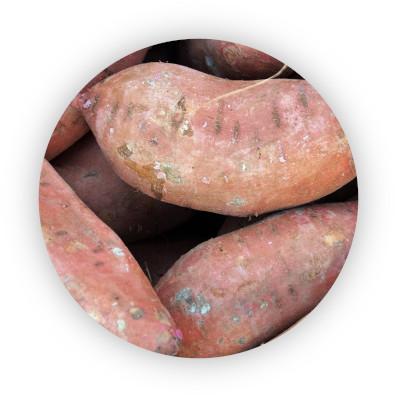 sladke-brambory