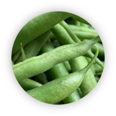 zelene-fazolky