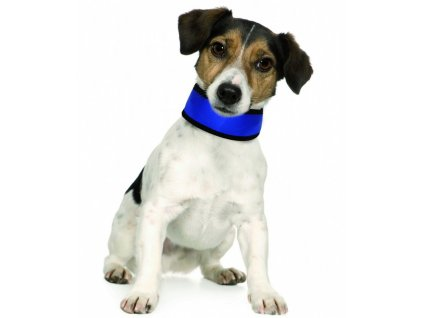 IMAC chladici obojek pro psy nylonovy 36 38 cm jak vypada na pejskovi