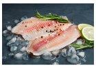 Ryby sladkovodní - chlazené