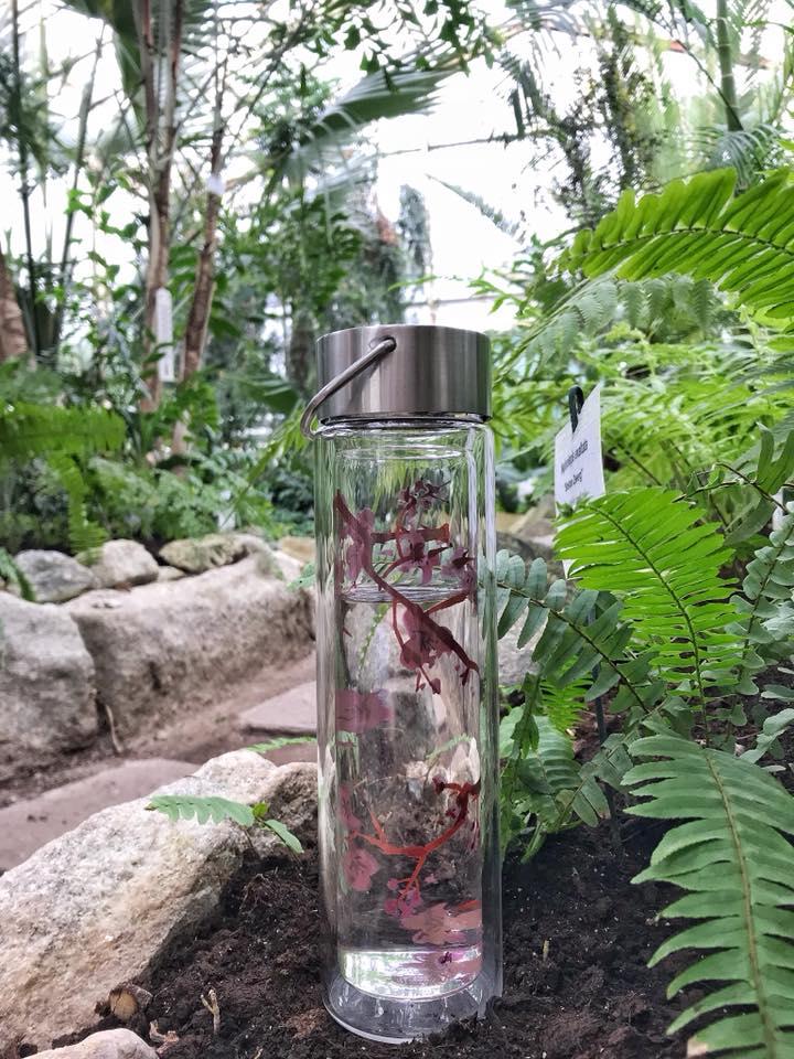 Recenzia fľaše FLOWTEA od blogerky Naty_Nely