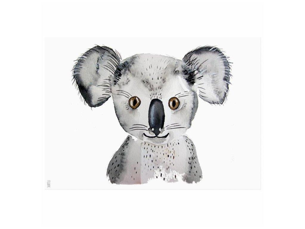 Plagát do detskej izby Koala