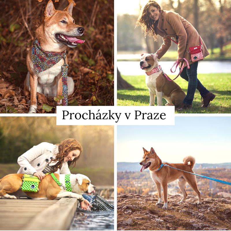 9 tipů na procházky se psem v Praze a okolí