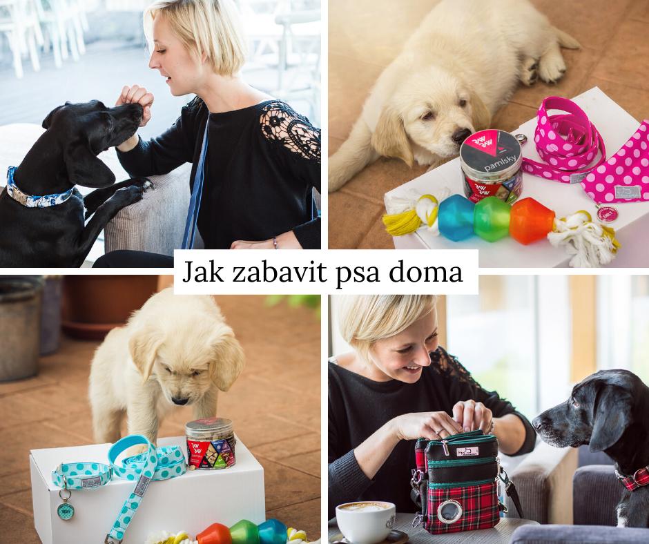 4 způsoby, jak zabavit psa doma