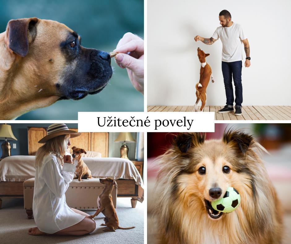6 užitečných povelů, které můžete naučit svého psa
