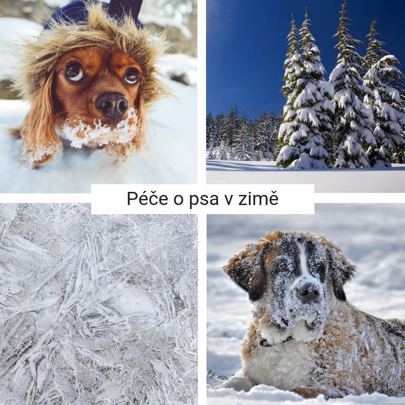 Jak pečovat o psa v zimě