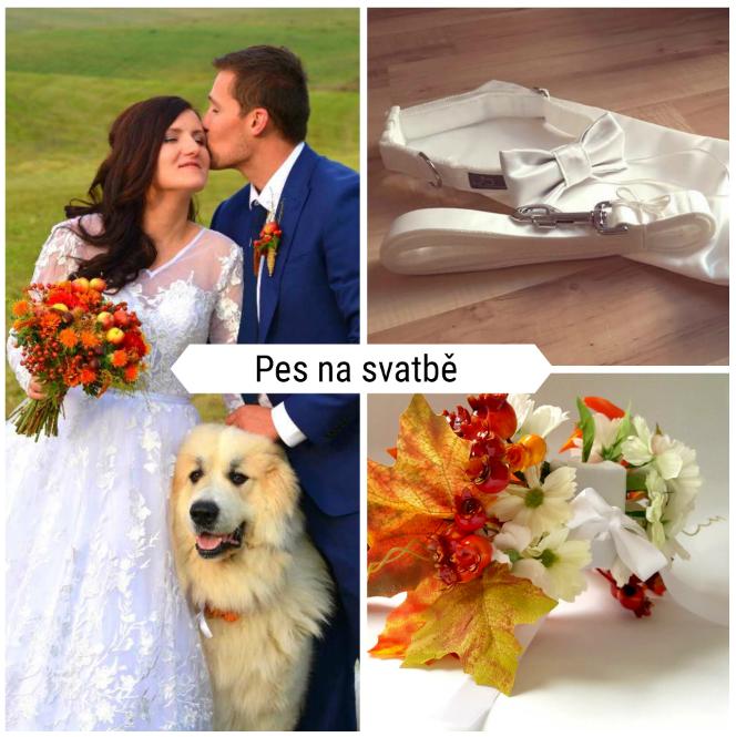 Pes na svatbě?