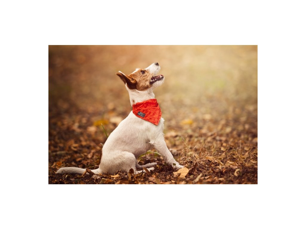 vyr 162 vyr 162Red Satky pro psy obojek krasny stylovy designovy satek demeven s kovovou sponou dog neckerchief beautiful stylish red cerveny