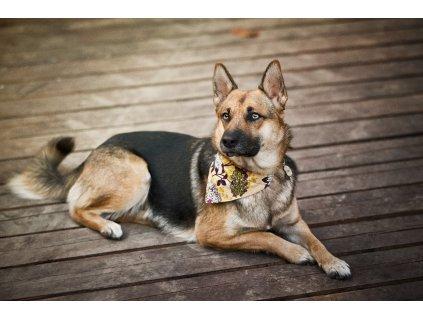 Blossom satek pro psa na obojek krasny kvetinovy dog scarf collar psi satecek demeven border nemecky ovcak vlcak