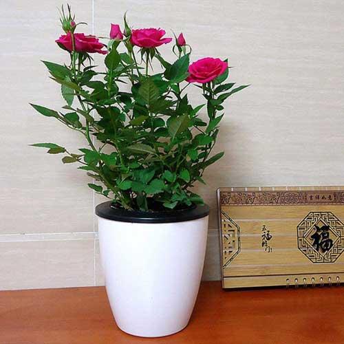 kvetinac-do-exterieru-a-interieru