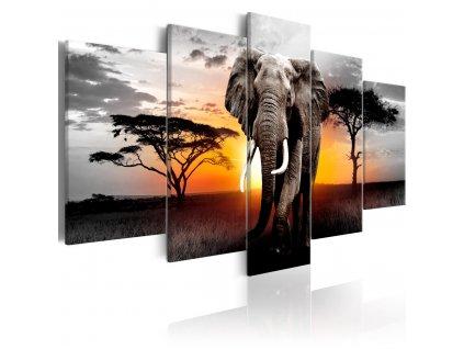 Petidilne-obrazy---slon-v-Africe-II---100x50-cm-na-Deminas
