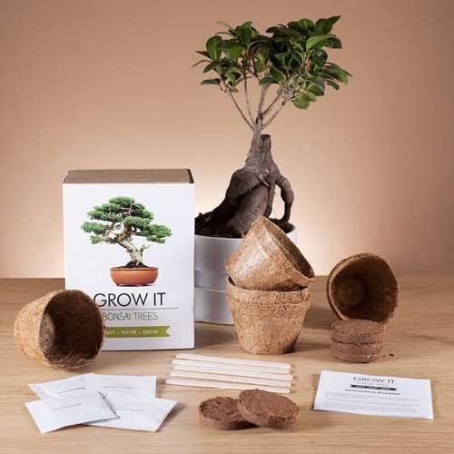 unikatny-bonsai