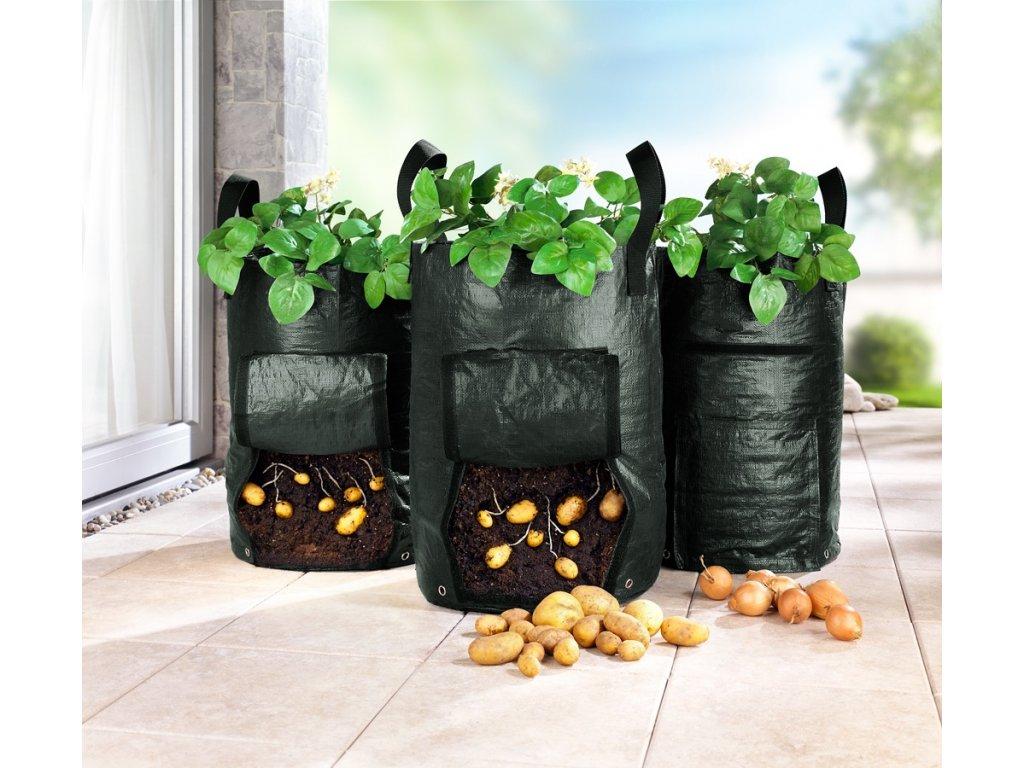 pestovani brambor rajciat