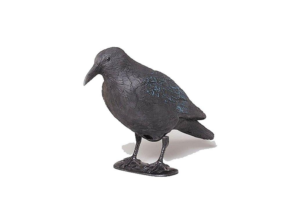 plašenie vtákov havran