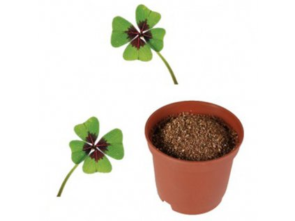 Vypestuj-si-štvorlístok --- kvetináčik-na-Deminas