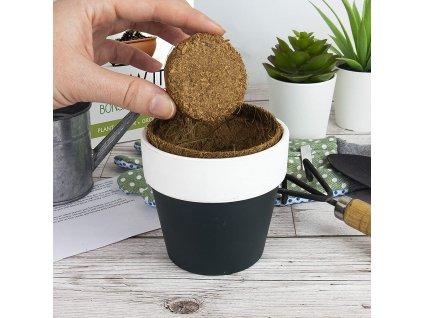 3197 grow it bonsai