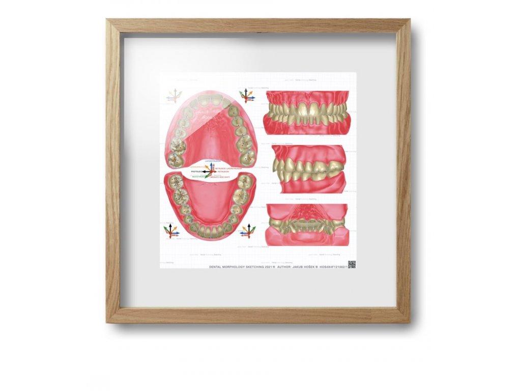 dental morpholodgy pictures.014 (kopie)