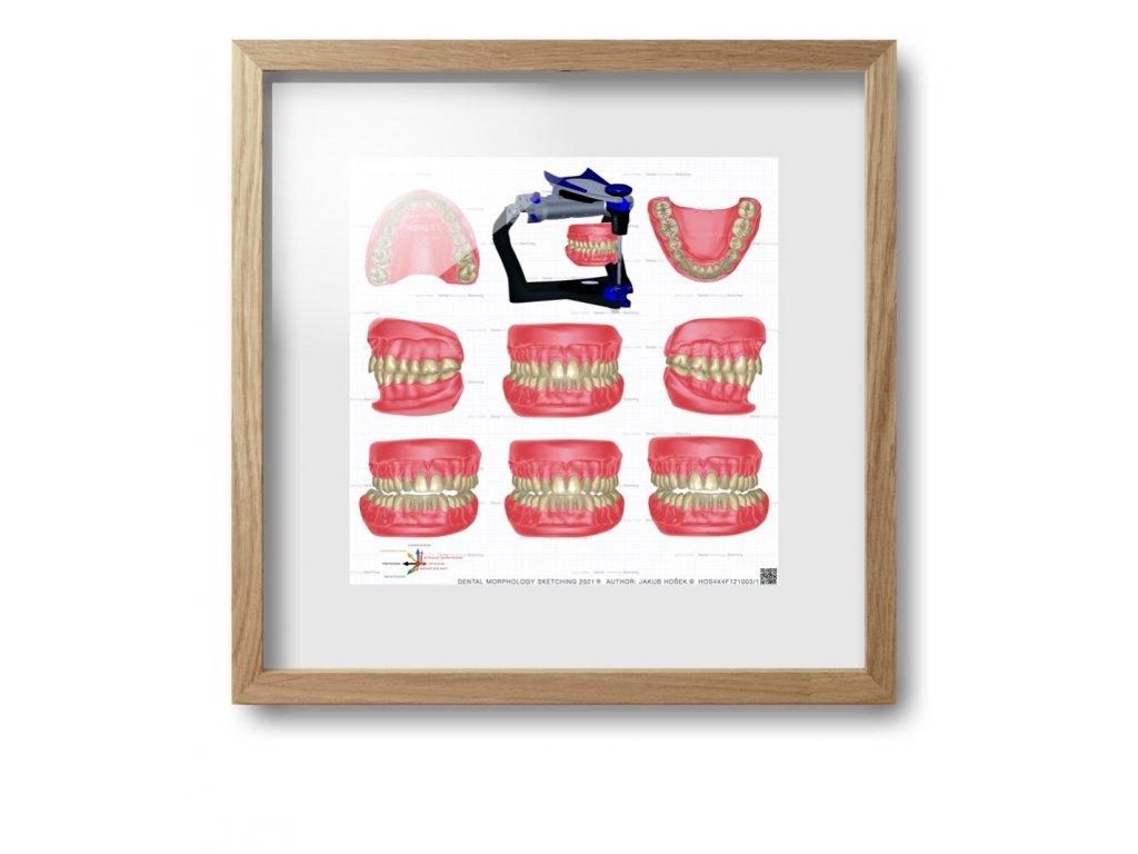 dental morpholodgy pictures.016 (kopie)