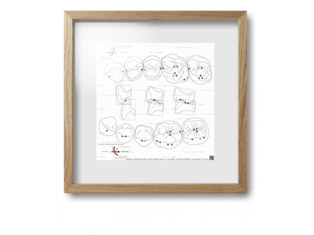 dental morpholodgy pictures.032 (kopie)