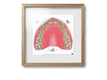 dental morpholodgy pictures.018 (kopie)