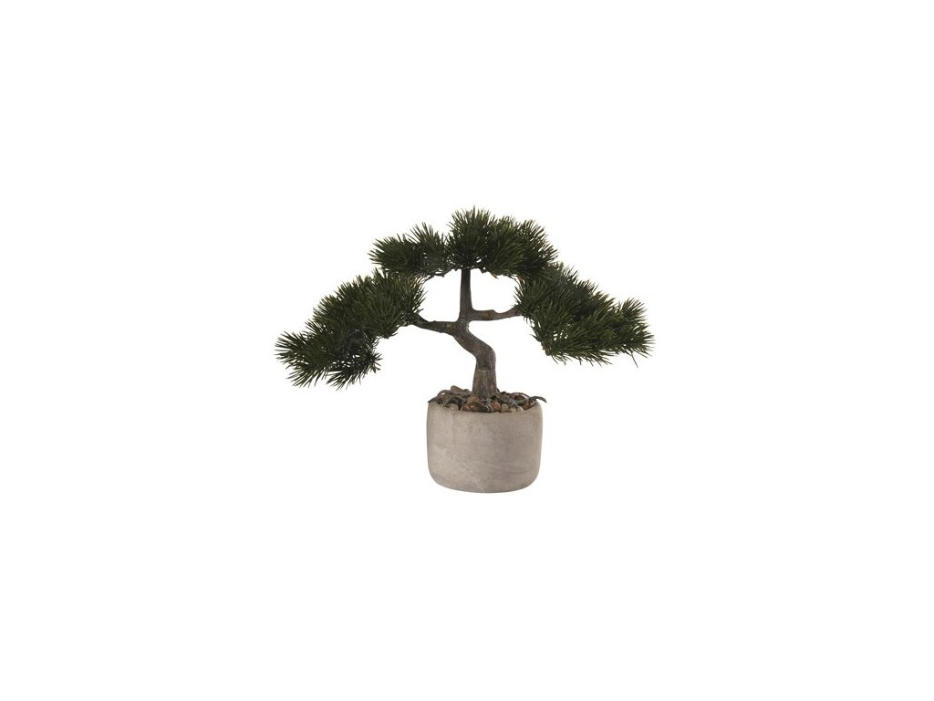 0032590 bonsai borovice vckvetinace 0 550