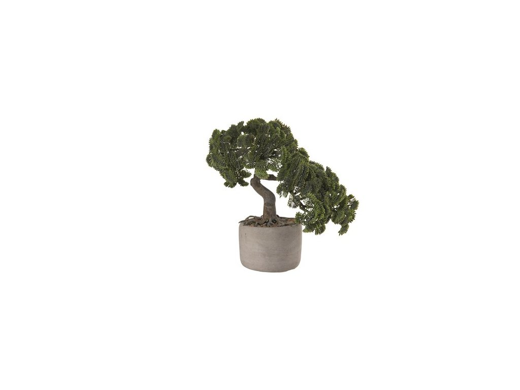 0032591 bonsai cypris vckvetinace 0 550