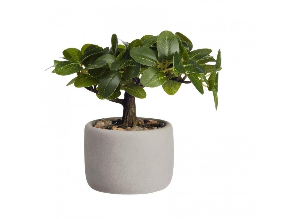 0042039 bonsai ficus vckvetinace 0