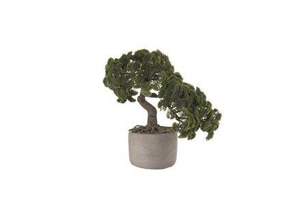 0032591 bonsai cypris vckvetinace 0 550