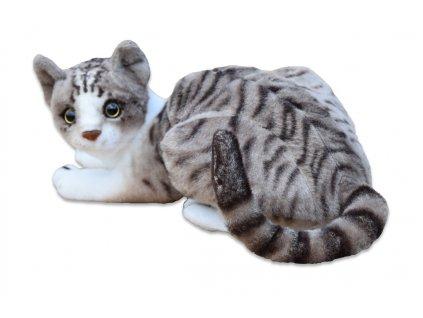 Kočka micka ležící 1
