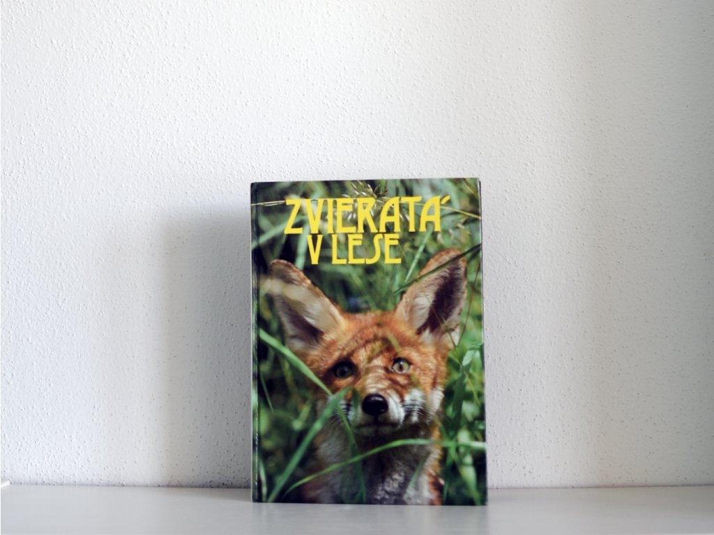 zvierata v lese21 1