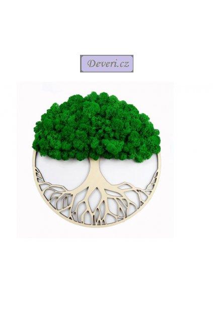 Obraz strom s mechem 40cm zelený (2)