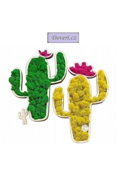 Živý obraz kaktus 60cm různé barvy